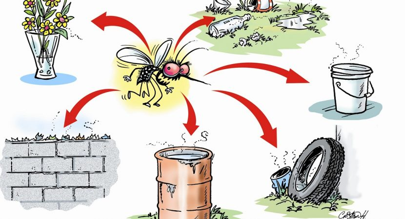 Dengue fever infection in Saudi Arabia - What is dengue fever and how to prevent it?