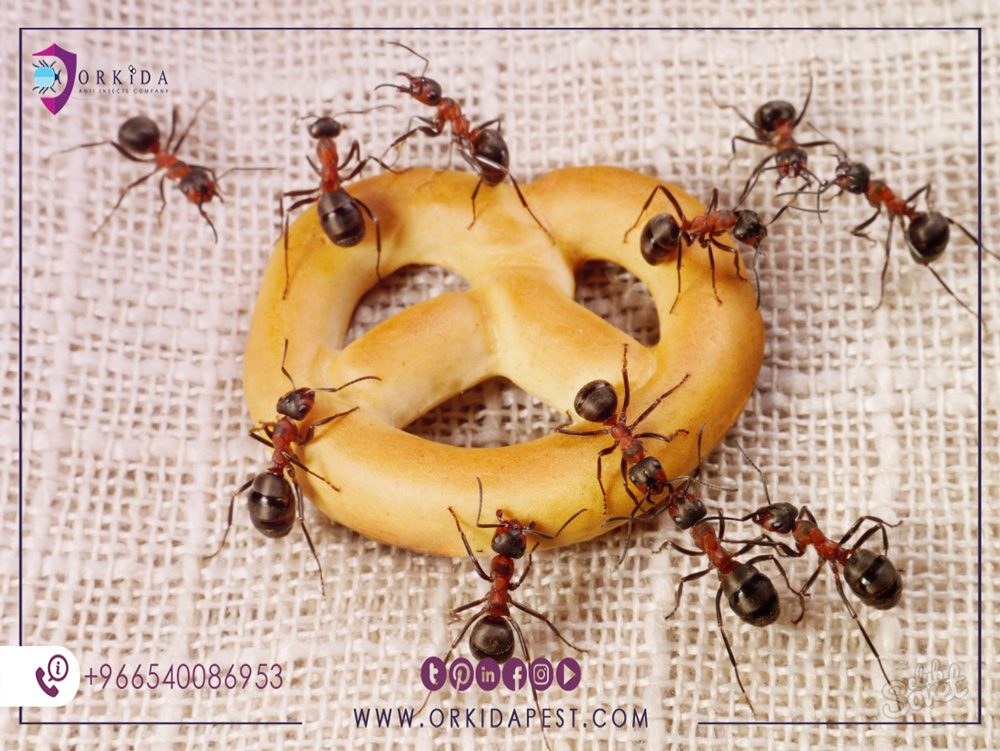 How do ants die? - 5 effective ways to kill ants naturally