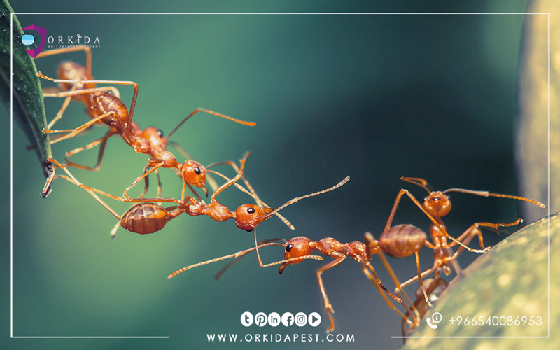Ants - all you want to know about the life of ants and how to get rid of it forever