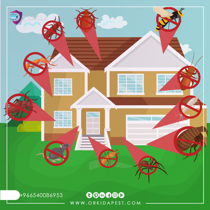 Small household insects - The most dangerous types of small house insects