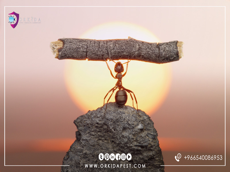 10 Interesting facts about ants - strange information about ants and his life in pictures