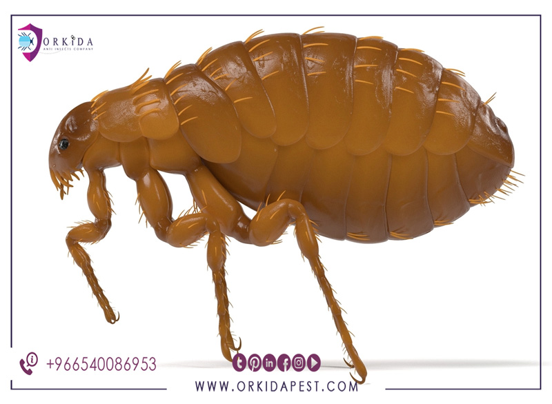 Treatment of fleas - is it necessary to use expensive control pesticides or are there effective and cheap methods؟