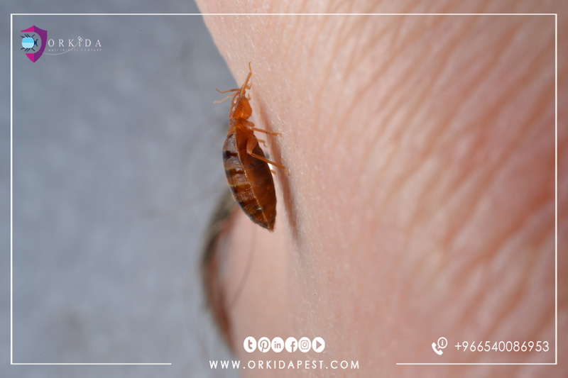 Causes of Bed bugs - Why does your home bed bugs invade?
