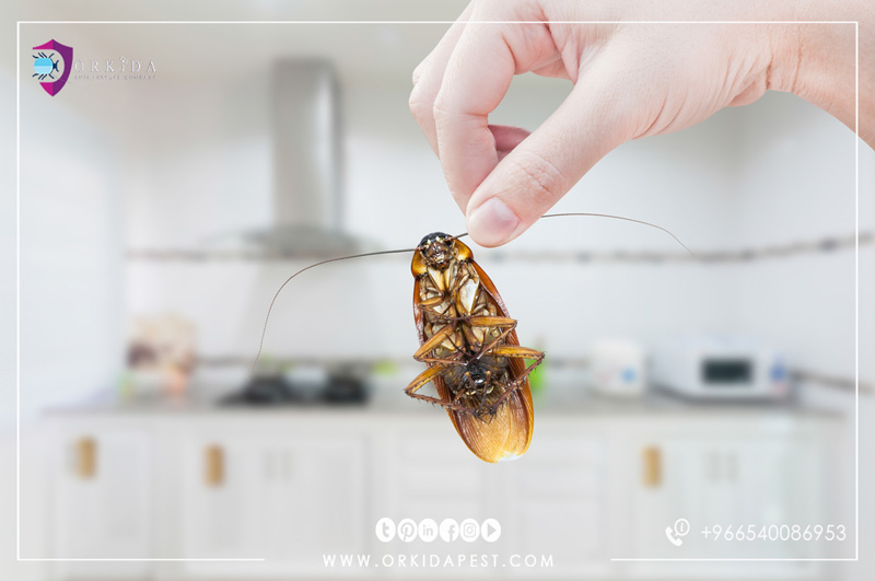 How to Eliminate Cockroaches in The Kitchen 6 Natural Ways to Eliminate Cockroaches in Your Home