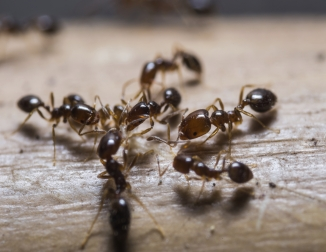 How Do I Eliminate Ants At Home? 6 Natural Ways To Get Rid Of Black Ants In  The Kitchen